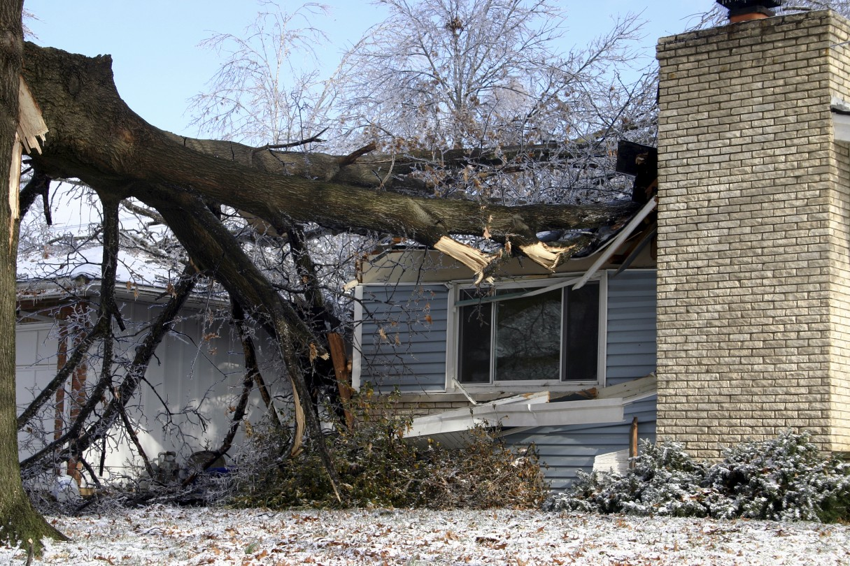 Roof damage caused by fallen tree.