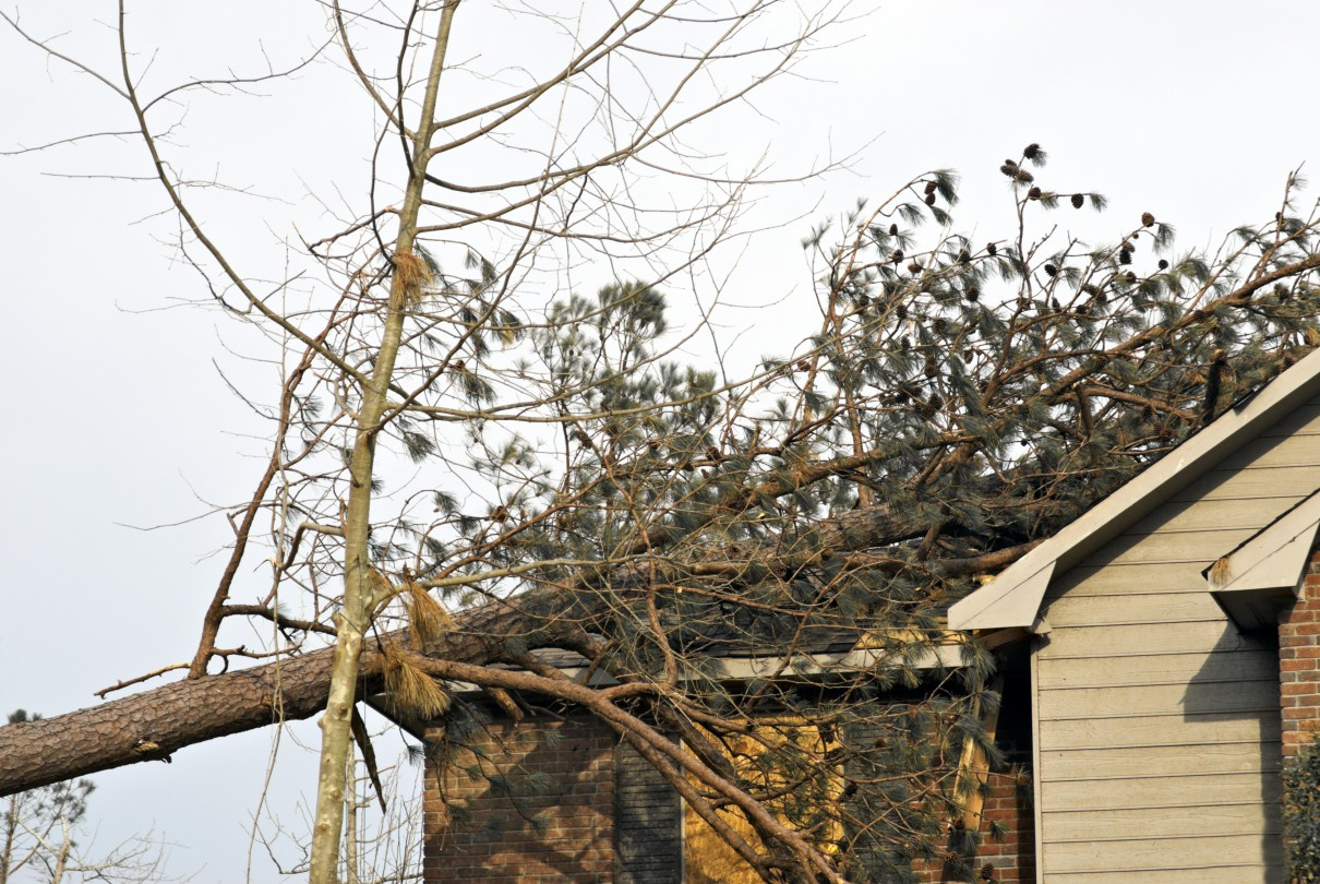 Damage Analysis: Tornado caused pine tree to fall over on house smashing through its roof.